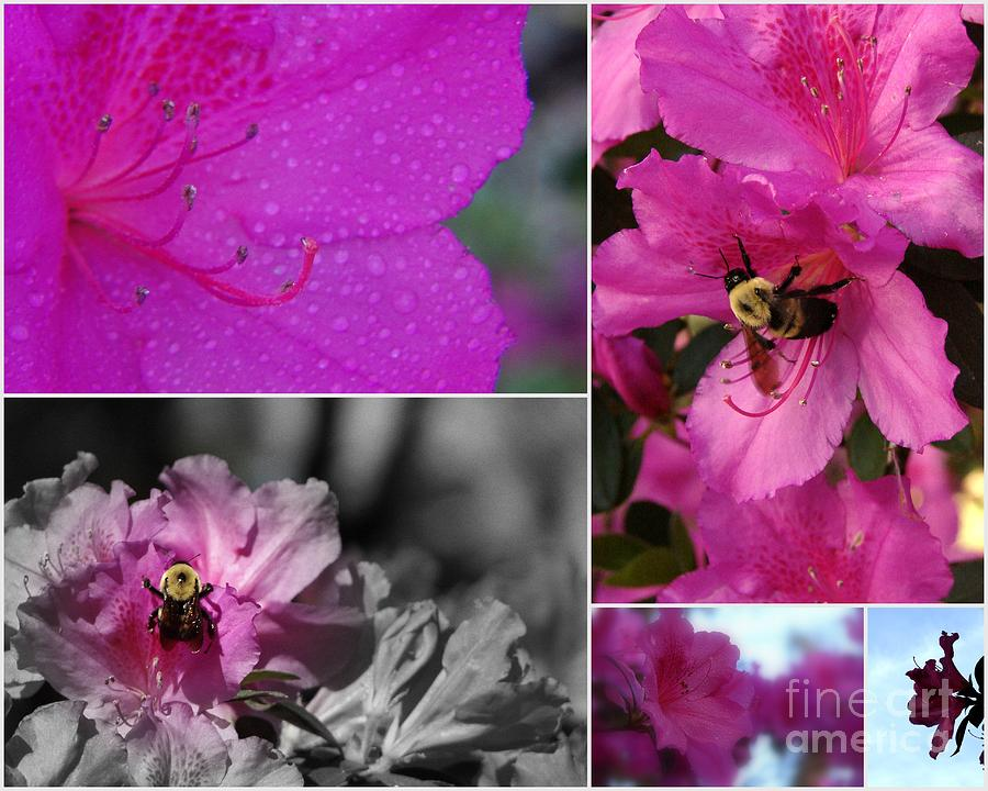 Collage Photograph - Bumblebee Bonanza by Priscilla Richardson
