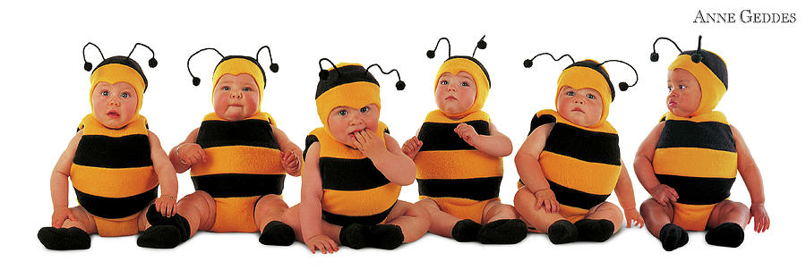 Baby Photograph - Bumblee Bees by Anne Geddes