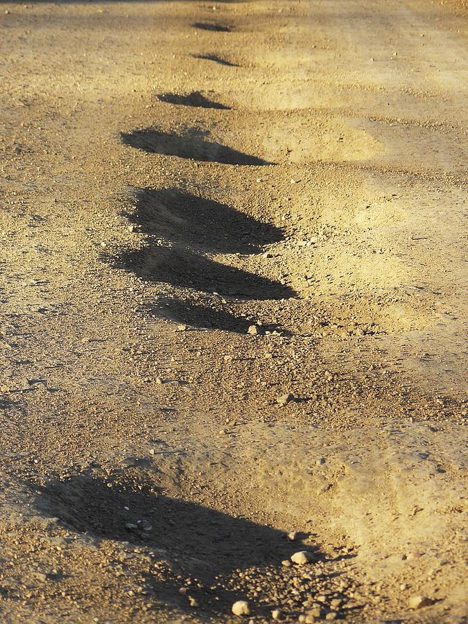 Fun Photograph - Bumps in the Road by David Kehrli