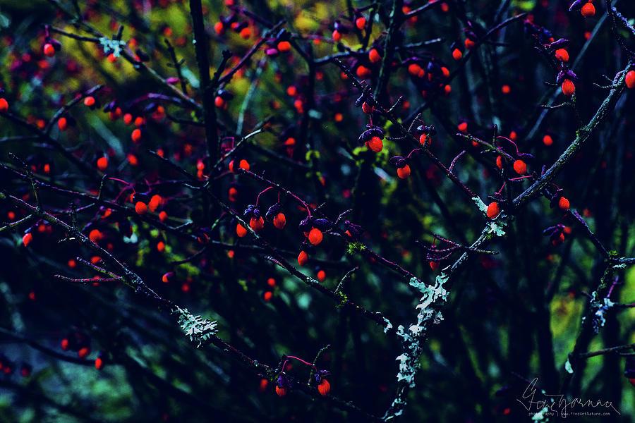 Reds by Gene Garnace