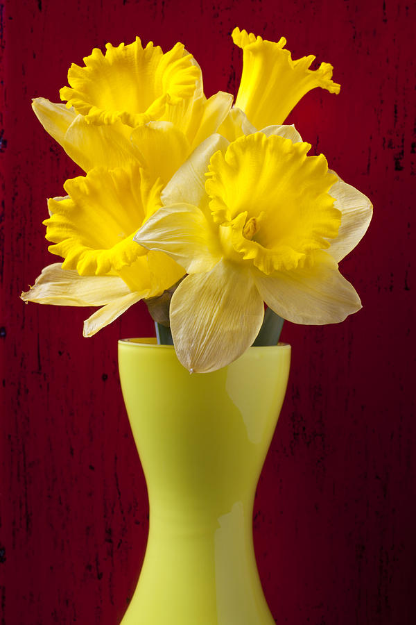 Yellow Photograph - Bunch Of Daffodils by Garry Gay