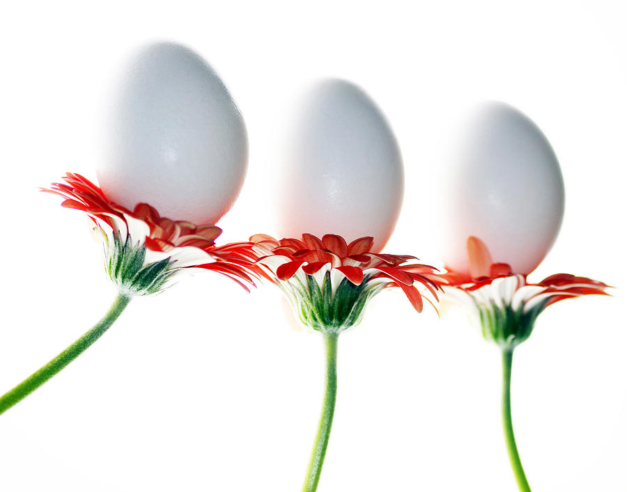 Eggs Photograph - Bunny Bouquet by Rebecca Cozart