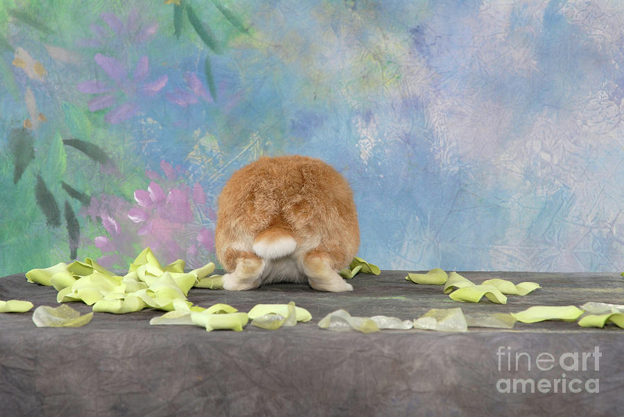 Netherland Photograph - Bunny Butts Are Beautiful  by Bright Eyes Studio