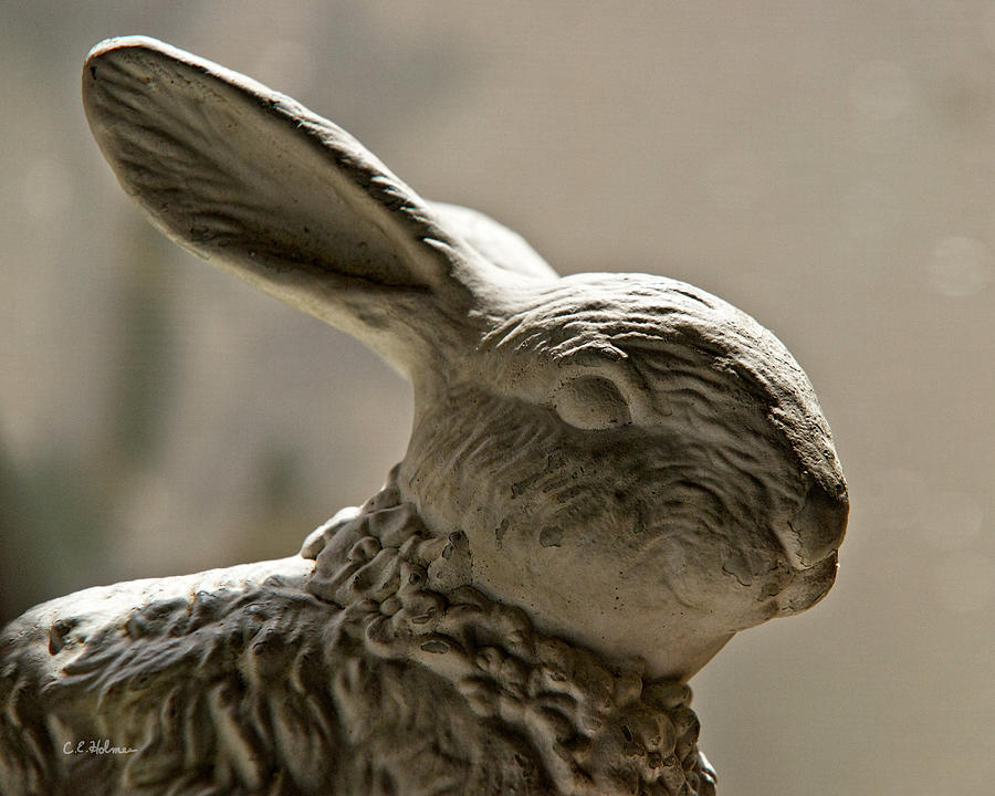 Bunny Photograph - Bunny by Christopher Holmes