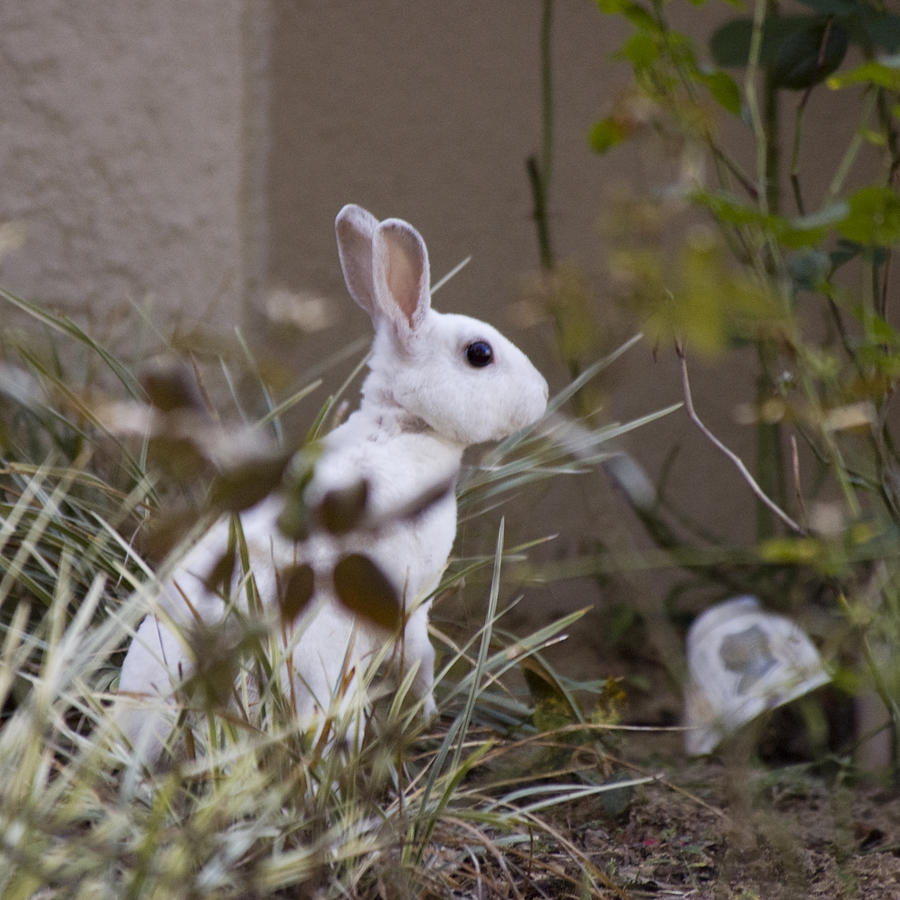 Rabbit Photograph - Bunny In The Garden by Anthony Towers