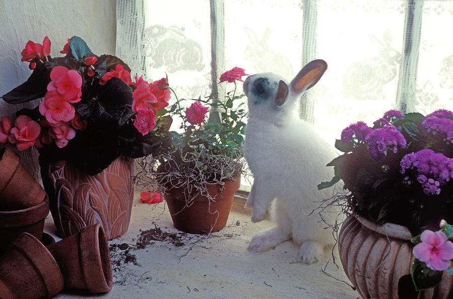 Bunny Photograph - Bunny In Window by Garry Gay