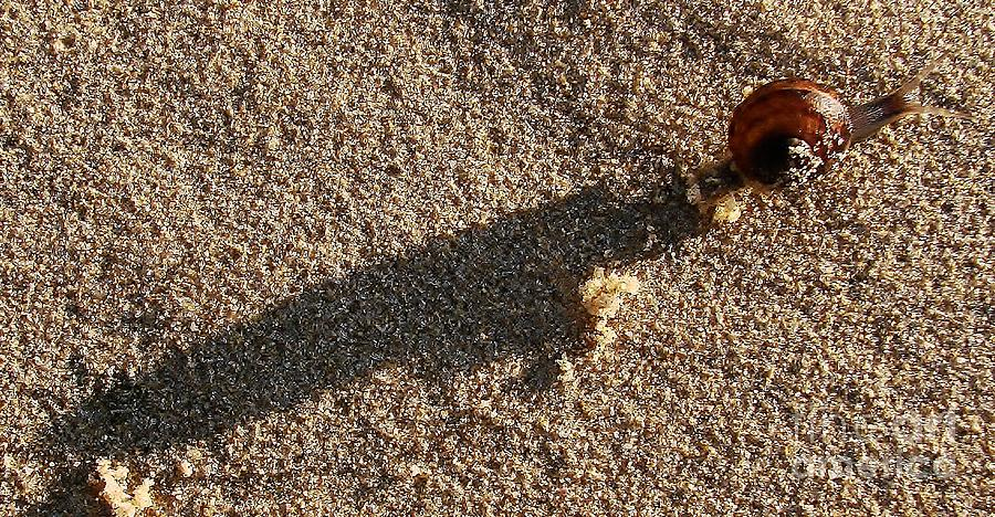 Snail Photograph - Burden by Lorles Lifestyles