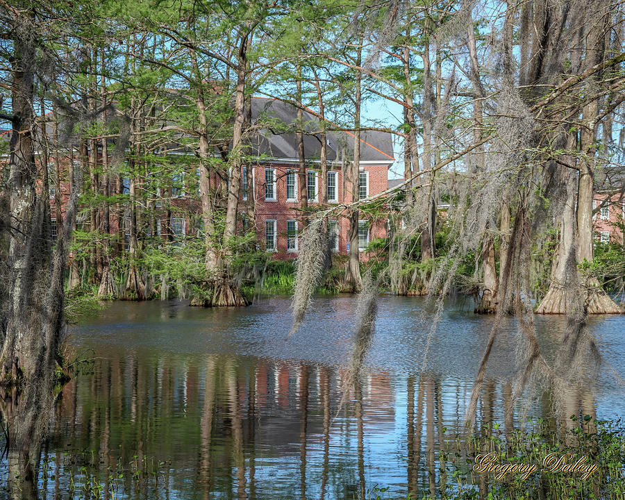 Burke Hall Cypress Lake Photograph by Gregory Daley  MPSA