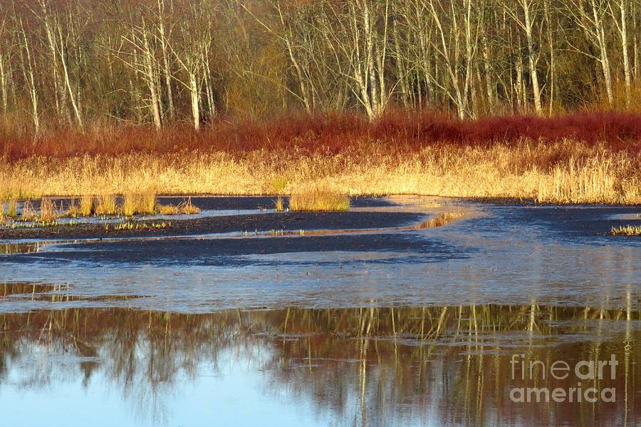 Grasses Photograph - Burnaby Lake by Frank Townsley