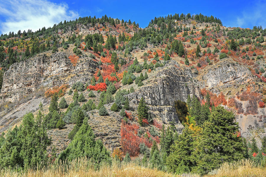 Logan Canyon Photograph - Burning Bushes by Donna Kennedy