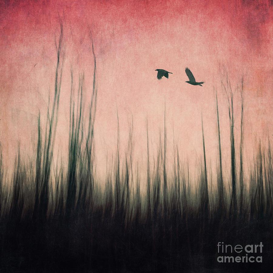 Raven Photograph - Burnt Ground by Priska Wettstein
