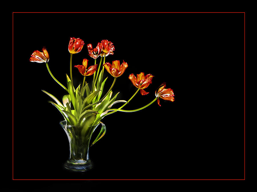 Burnt Orange Tulips by David Brookwell