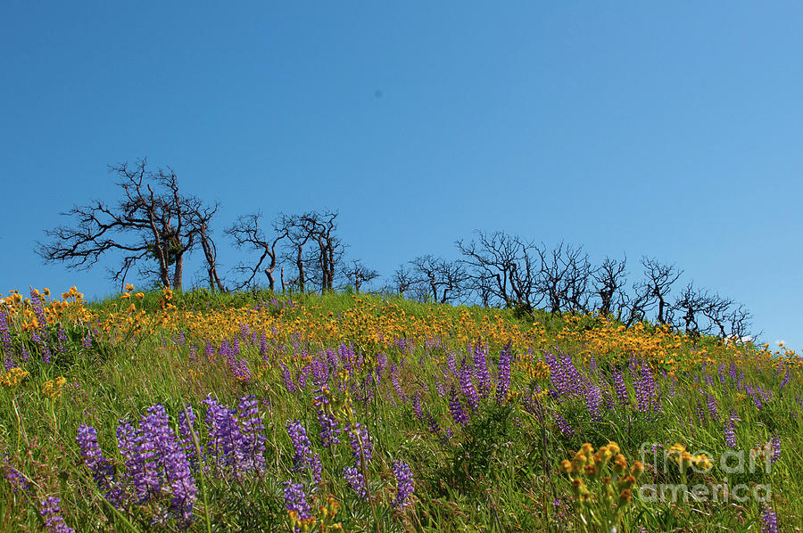 Wildflowers Photograph - Burnt Trees by Emilia Brasier