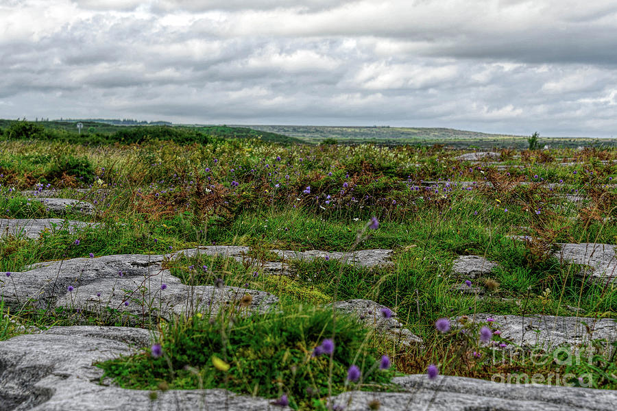 Burren Beauty by Elvis Vaughn