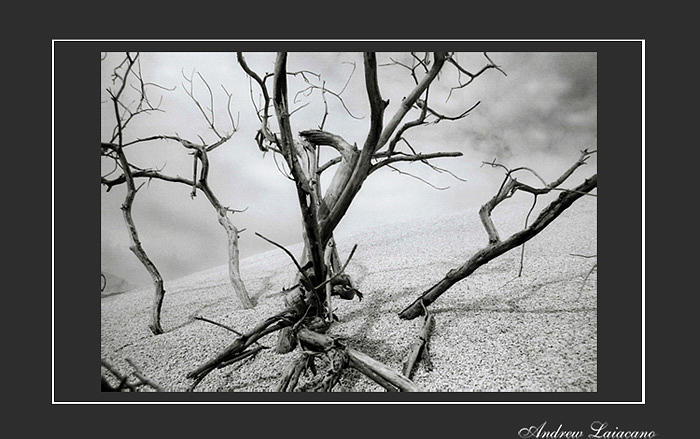Landscape Photograph - Burried Tree by Andrew Laiacano