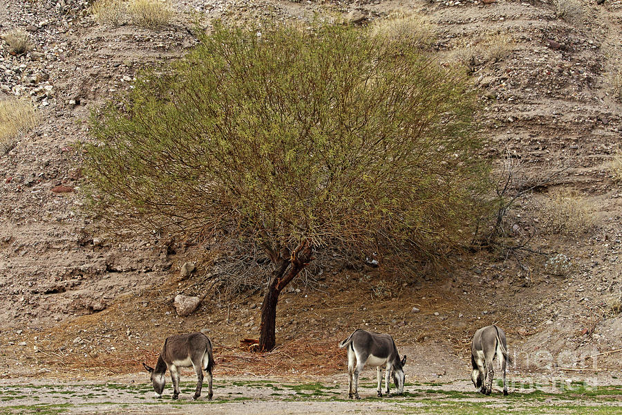 Nature Photograph - Burro Tree by Rick Mann