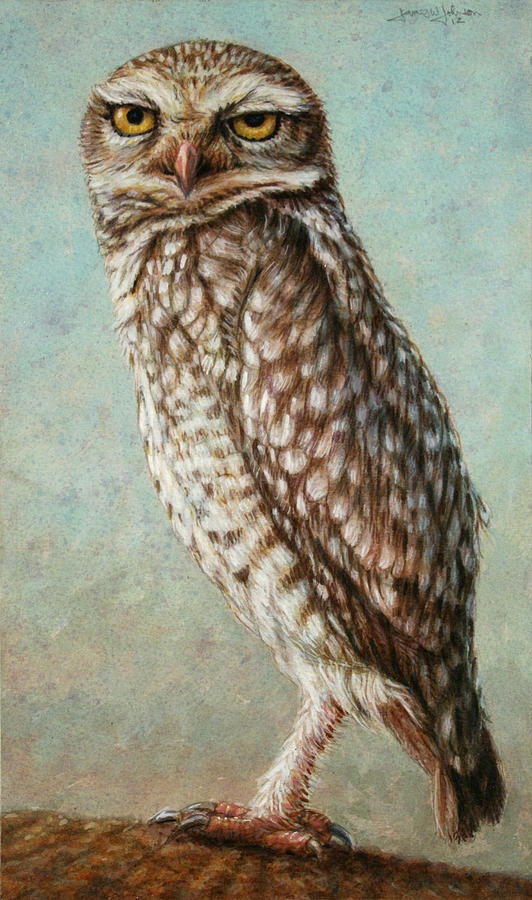 Owl Painting - Burrowing Owl by James W Johnson