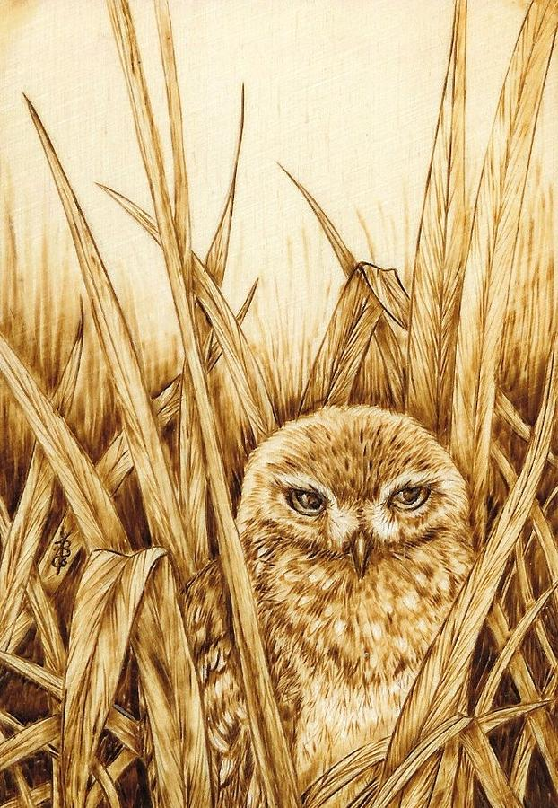 Burrowing Owl by Sharon Bechtold