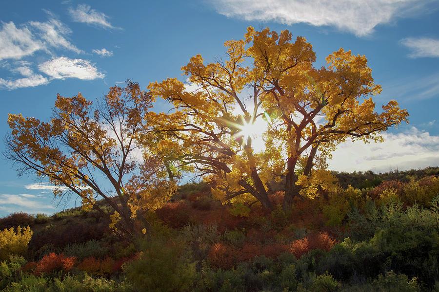Cottonwood Photograph - Burst Through The Trees by Jen Manganello