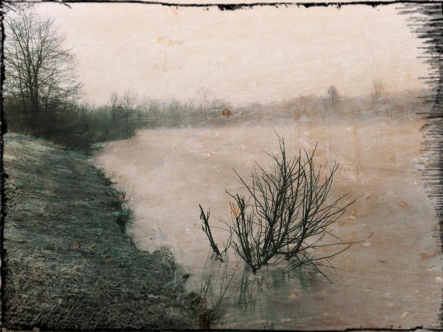 Bush in Pond by Michael L Kimble