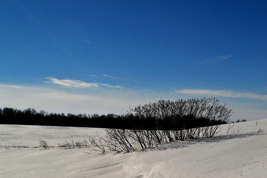 Abstract Photograph - Bush In The Snow  by Lyle Crump