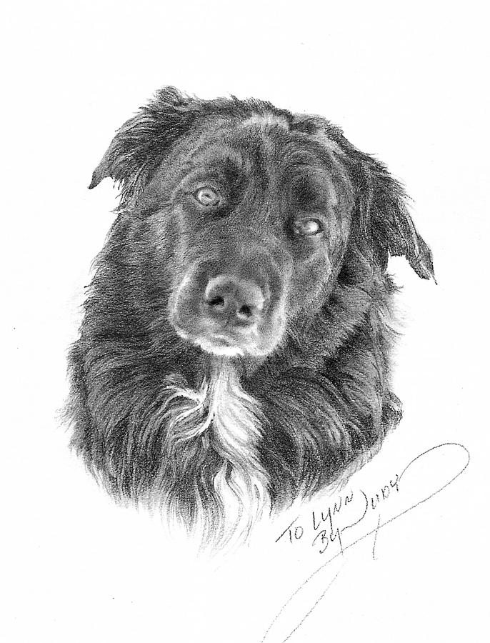 Dog Portrait Drawing - Buster by Judith Angell Meyer