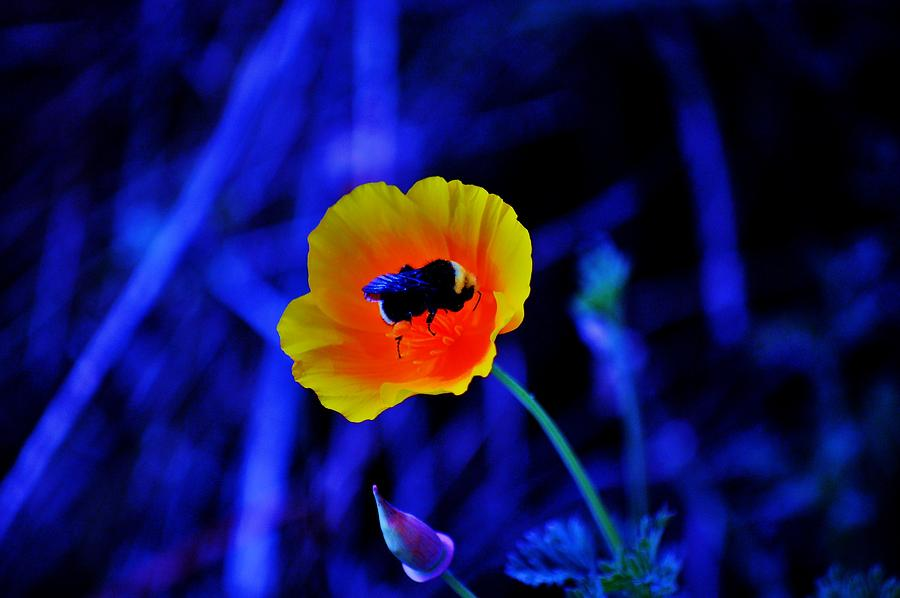 Flower Photograph - Busy Bee by Helen Carson