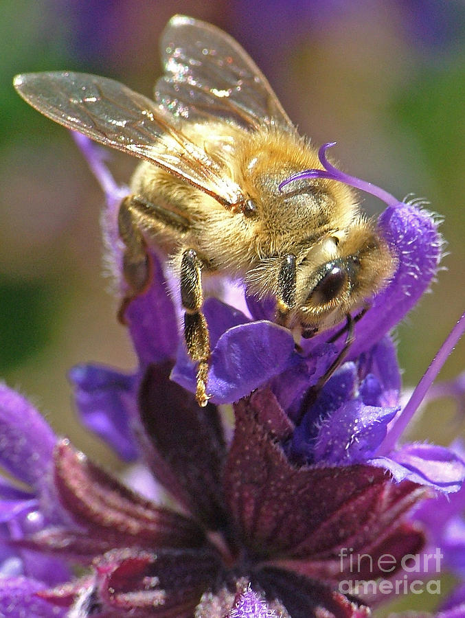 Busy Photograph - Busy Bee by Katie LaSalle-Lowery