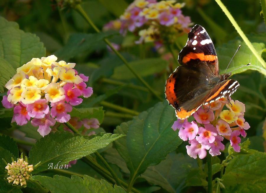 Monarch Butterfly Photograph - Busy Butterfly Side 1 by Felipe Adan Lerma