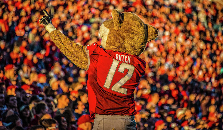 Butch Cougar Photograph