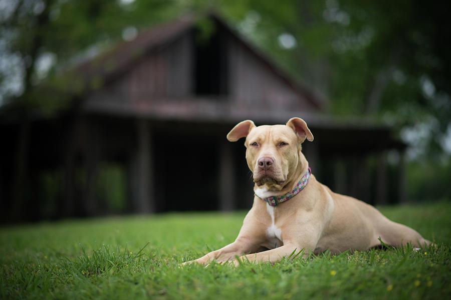 Dogs Photograph - Butter Bean by Brian Farmer