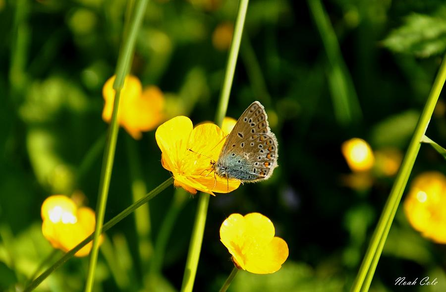 Butterfly Photograph - Buttercup Butterfly by Noah Cole