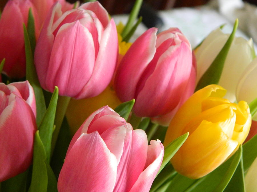 Buttercup Pinks by Karen Mesaros