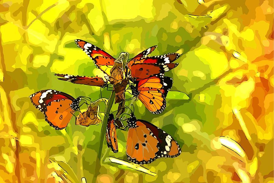 Butterfly Photograph - Butterflies by Ankeeta Bansal