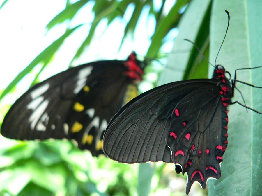 Nature Photograph - Butterflies by Colin Bonfield