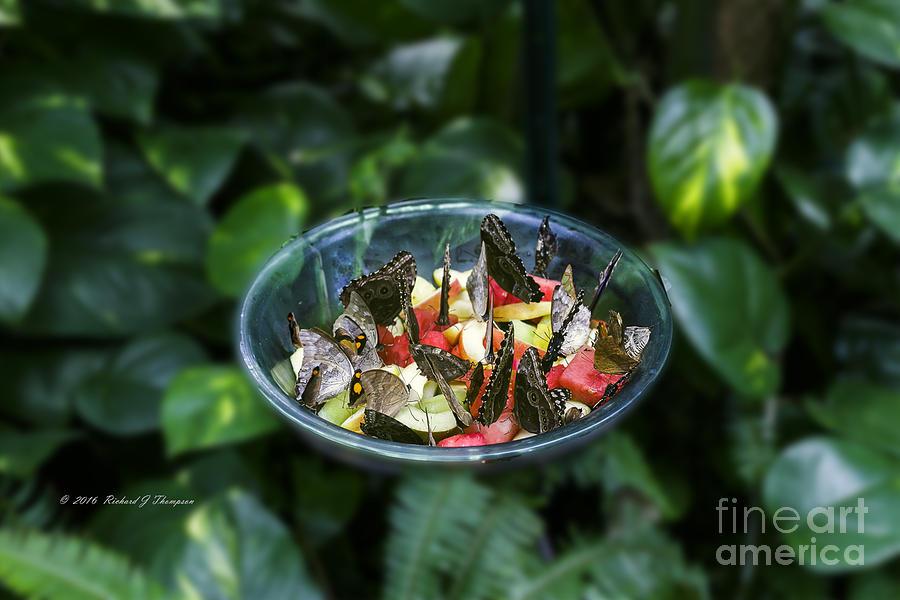 Butterflies Feeding by Richard J Thompson