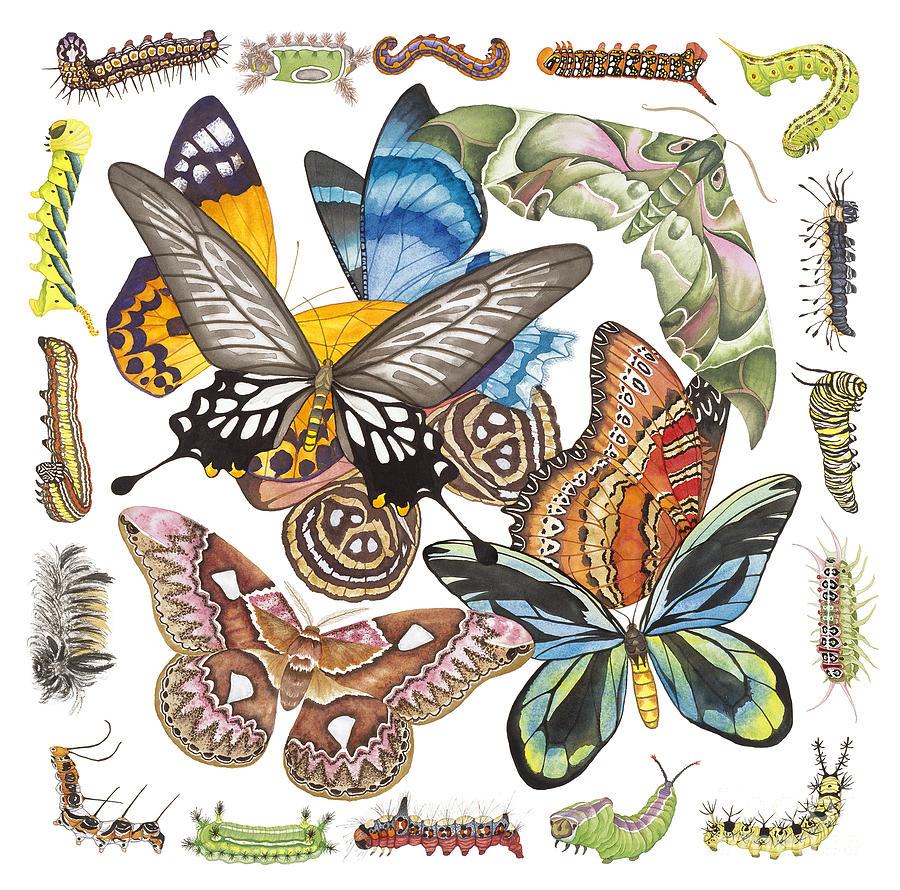 Butterflies Painting - Butterflies Moths Caterpillars by Lucy Arnold