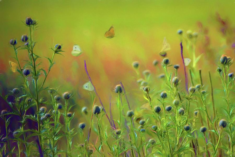 Butterflies Photograph - Butterflies - Wildflowers by Nikolyn McDonald