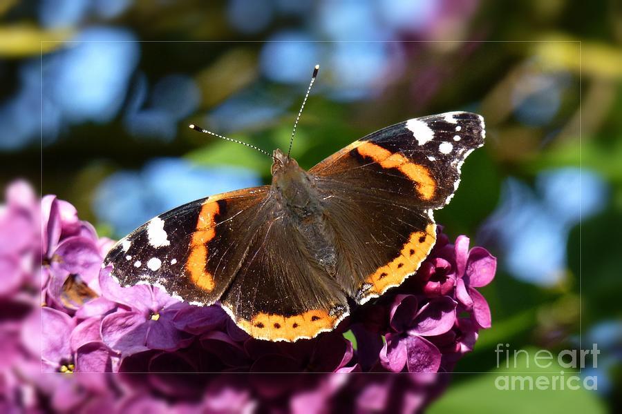 Beautiful Photograph - Butterfly 12 by Jean Bernard Roussilhe