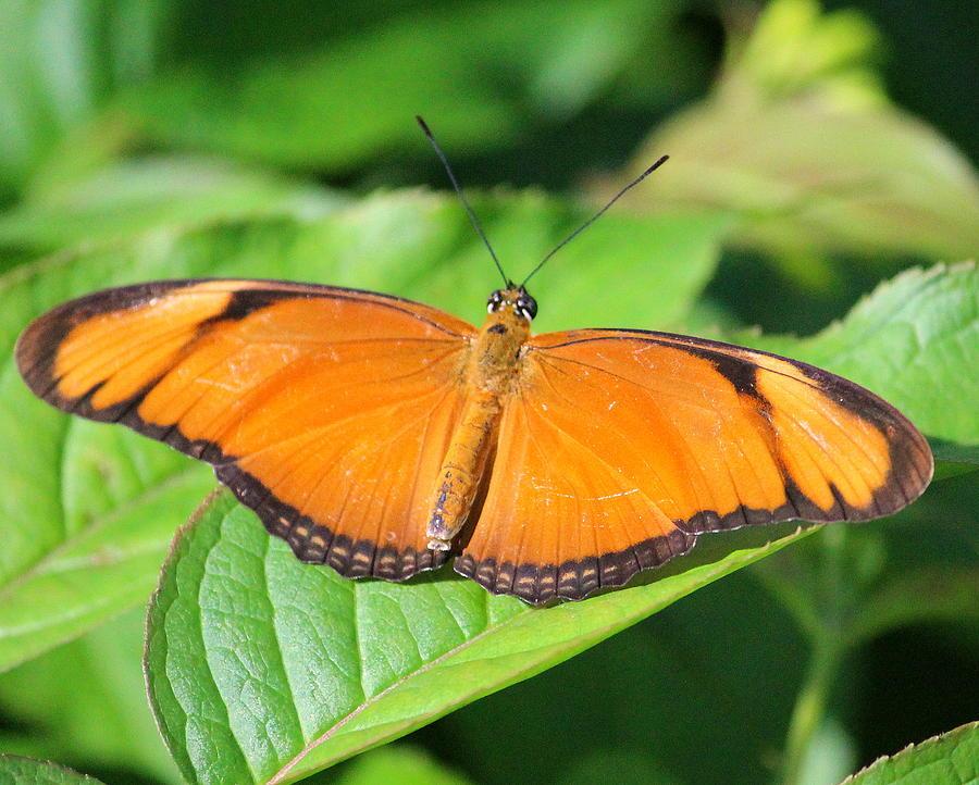 Butterfly 2 by John Olson