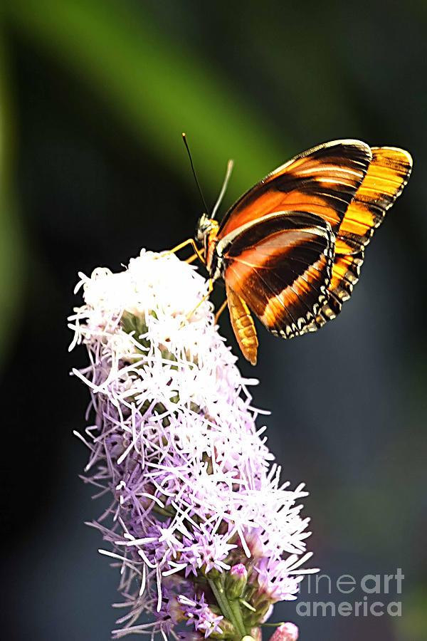 Tom Prendergast Photograph - Butterfly 2 by Tom Prendergast