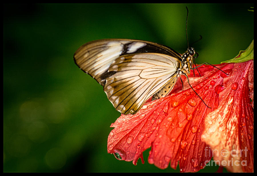 Butterfly Photograph - Butterfly 24 by Larry White
