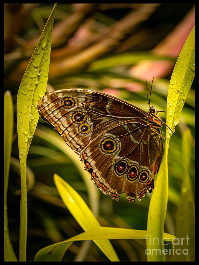 Butterfly Photograph - Butterfly 25 by Larry White