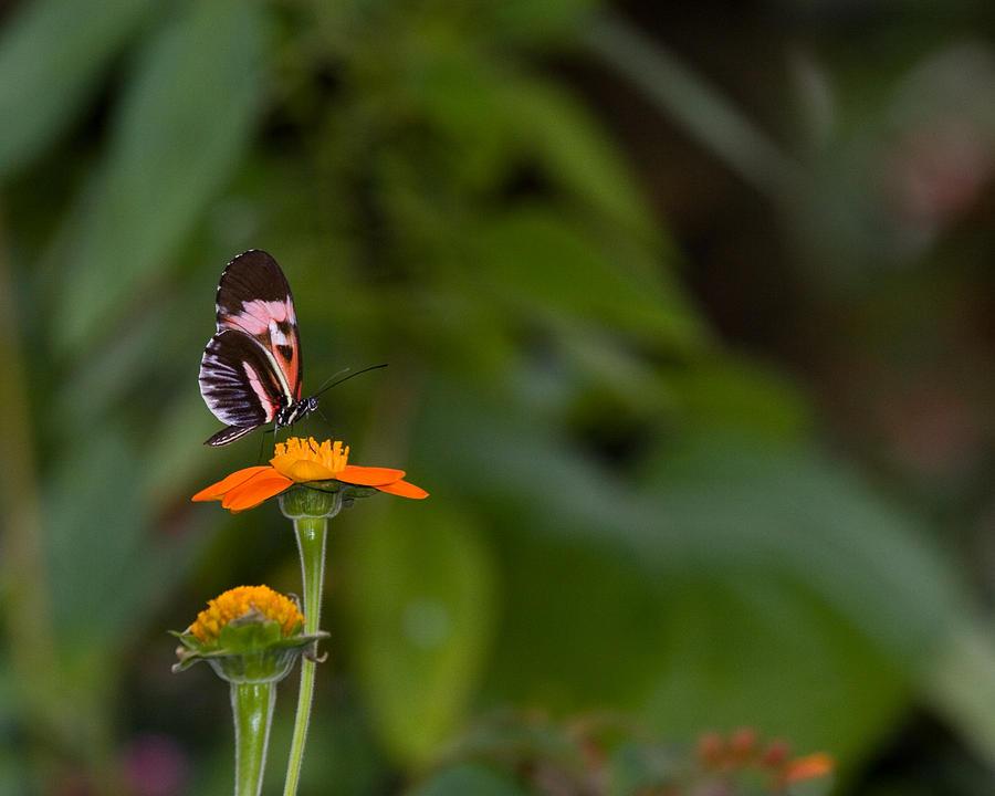 Butterfly 26 by Michael Fryd