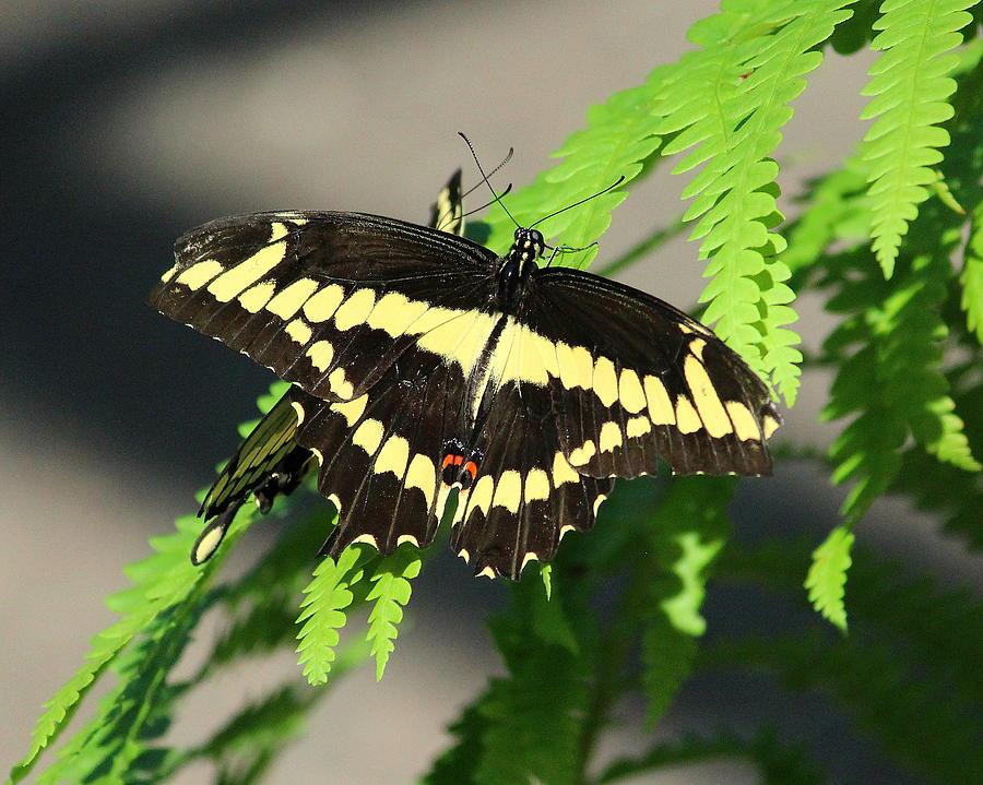 Butterfly 5 by John Olson