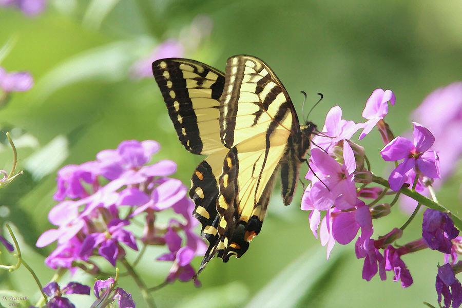 Butterfly Digital Art - Butterfly #9 by David Stasiak