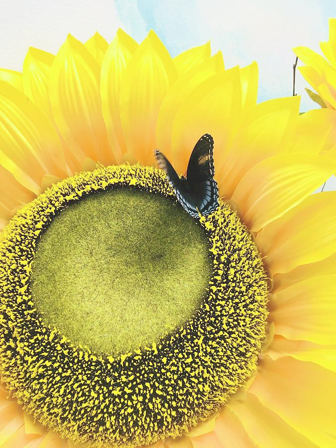 Butterfly  by Amanda Jane Kohler