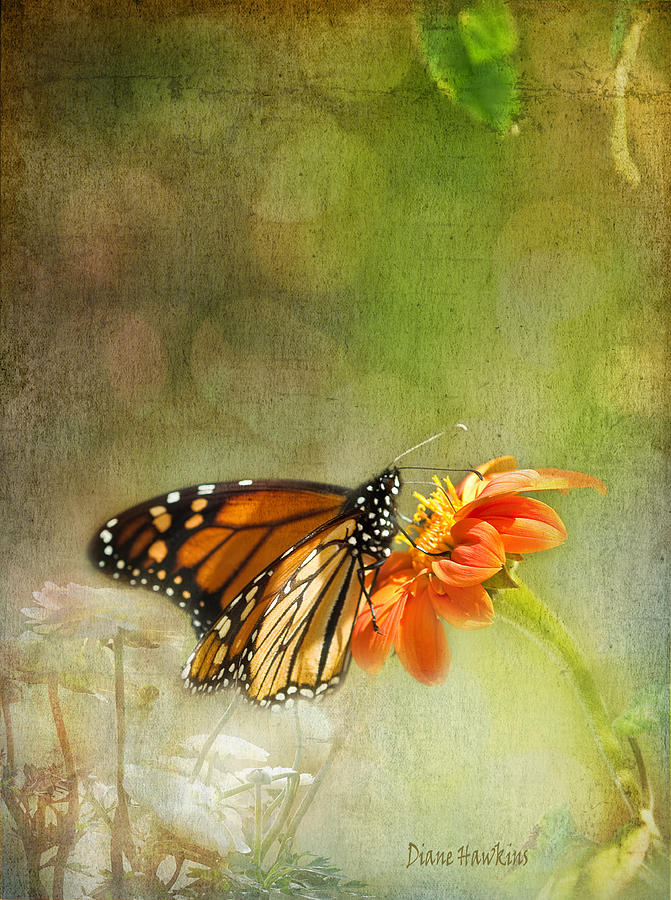 Flowers Photograph - Butterfly And Bokeh by Diane Hawkins