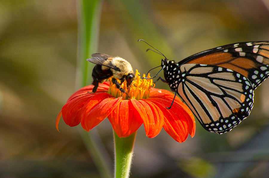 Butterfly and Bumble Bee by Willard Killough III