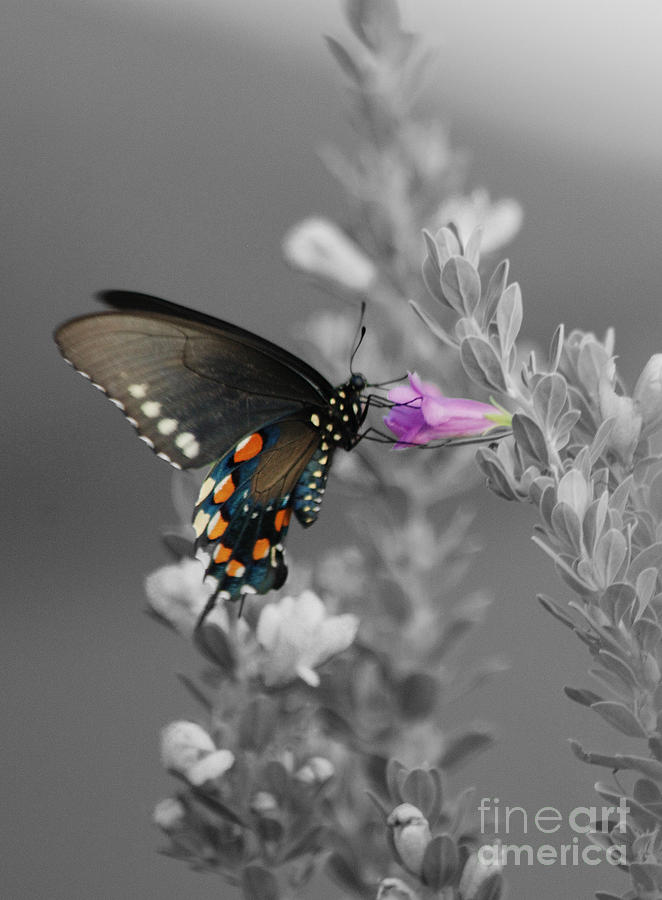 Butterfly Photograph - Butterfly And Flower by Jim Wright